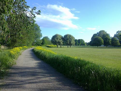 Bild på en landsväg på sommaren
