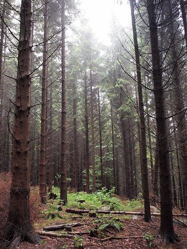 Bild på en skog